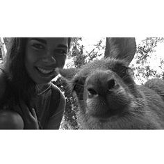 Klassisches 'ich-war-in-Australien-Kangaroos-streicheln'-Selfie #kangaroo #selfie #currumbinwildlifesanctuary #Australia #SurfersParadise #derKlassiker #justaustraliathings #aberschonsüß #SpaßmitWildlife #wombats #koalas #alles @_la_maja_ by aloha_vera_ http://ift.tt/1X9mXhV