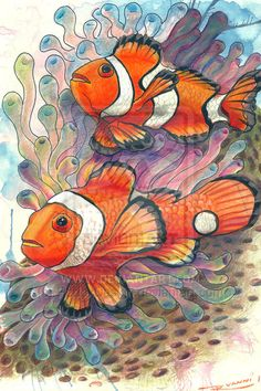 """Clown Fish"" colored pencils"