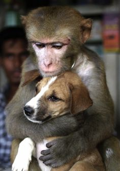 A female monkey fondly cuddles a puppy at a shop in the Bangladeshi capital Dhaka, May 9, 2002. The pet monkey, bought from an animal trader,