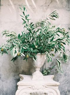 OLIVE BRANCH Italy Inspired Rustic Wedding via once wed. Arrangement by cloth of gold flowers. Olive Branch Wedding, Olive Wedding, Tree Wedding, Italy Wedding, Wedding Table, Floral Wedding, Wedding Bouquets, Wedding Flowers, Branches Wedding