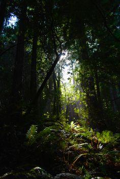 Muir Woods - Mill Valley, CA