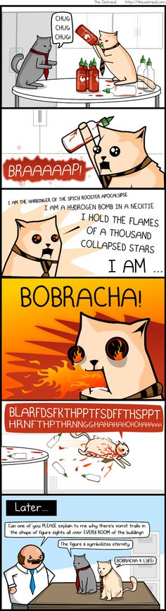 What's better than the Bobcats from The Oatmeal?  Bobcats from The Oatmeal eating Sriracha sauce!