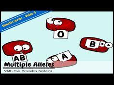 ABO blood type & multiple alleles...Amoeba Sisters video
