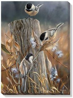 This Autumn Black-Capped Chickadees Wrapped Canvas Art features a beautiful painted scene of three chickadees sitting on a fence post in the middle of a field. The wrapped canvas design gives a unique Bird Pictures, Watercolor Bird, Wildlife Art, Bird Art, Beautiful Birds, Painting & Drawing, Art Drawings, Horse Drawings, Original Paintings