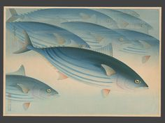 Ono Bakufu (1888 - 1976) - Tuna