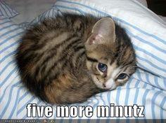 sleepy lolcat: Cute Animal, Kitty Cats, Cute Kitten, So Cute, Cute Cat, Kitty Kitty, Adorable Animal, Kittycat #cat #kitten