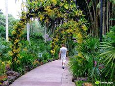 #Jardin_botanique de Singapour: reparti en plusieurs zones : les orchidées, les gingembres, la porte de Tanglin, la jungle, le jardin de l'évolution... On peut aussi voir un lac et un kiosque à musique