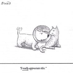 97 best new yorker images on pinterest new yorker cartoons