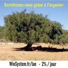 #InstaSize #winsystem #mlm #affiliation #Marketing #sponsor #business #money http://Winsystem.fr/lae. #arganier #argan #investissement -