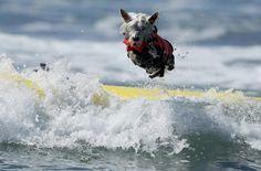 Cani di ogni razza e dimensione hanno partecipato alla quinta edizione della Surf City Surf Dog Competition. L'appuntamento presso la spiaggia di Huntington beach, in California, ha visto cani e padroni gareggiare per tre giorni tra le onde. Oltre alla gara vera e propria, anche sfilate di costumi p