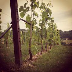 #tuscany #wine #winecellar #italy #architecture #antinori #marchesiantinori #chianti #madeinitaly