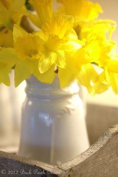 Yellow | Giallo | Jaune | Amarillo | Gul | Geel | Amarelo | イエロー | Kiiro | Colour | Texture | Style | Form | Pattern | daffodils