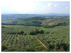 The view from Castillo di Poppiano