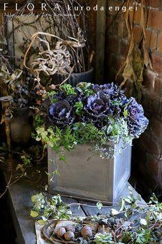 """Using Habotan Black Leaf. 』- 『ハボタン・ブラックリーフを使って。。。』 With Haboton Black Leaf. Dish Garden, Garden Art, Garden Plants, Garden Design, Green Flowers, Pretty Flowers, Flower Vases, Flower Pots, Black Leaves"