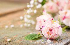 Petals of light pink rose Ultra HD wallpaper - Hd Wallpaper 4k, Rose Wallpaper, Nature Wallpaper, Beautiful Landscape Wallpaper, Beautiful Landscapes, 4k Ultra Hd Wallpapers, Light Pink Rose, Rosa Rose, Flower Backgrounds