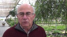 Celidonia. La planta de los mil usos (con Josep Pàmies)