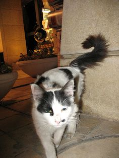 Olive Tree Hotel cat_2374
