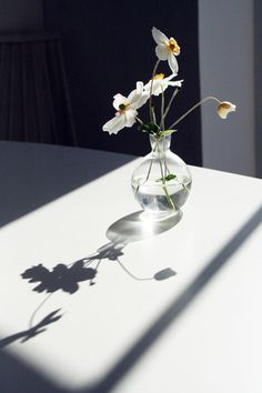 Beautifully delicate shadow and light. Photo by Maria Razzioli.