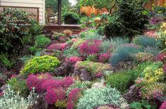 Gorgeous lush Rock garden in flower in spring on slope hillside, house, deck, rocking chair, , Dianthus, Festuca, fence, evergreens- Jan Waldemuth's garden, Portland, Oregon