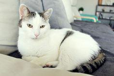 piękny kot :)