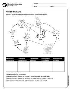 cadena alimenticia para colorear - Buscar con Google | Elemental ...