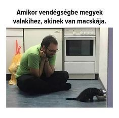 Pet Shop Online, Cat Lover, Einstein, Texts, Funny Pictures, Jokes, Van, Fictional Characters, Funny Things