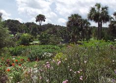 Kanapaha Botanical Gardens On Pinterest Bamboo Garden