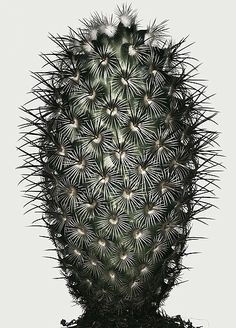 Peter Lippmann :: photographer :: Cactus 1