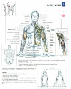 Barbell Curls ~ Re-Pinned by Crossed Irons Fitness