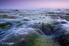 Blankets of spider silk in the dawn light, Balatonfokajar, Hungary by Laszlo Novak