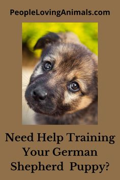 Doggy Dan's Perfect Puppy Program is the best way to train a German Shepherd puppy. It's super effective and affordable and covers all puppy training issues. Puppy Training, Dog Training