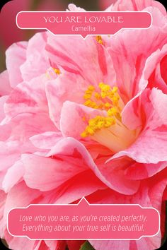 Weekly Angel Oracle Card Reading for March 3 through – Barbara Calvano Paper Peonies, Paper Flowers, Backdrop Decorations, Backdrops, Wedding Decorations, Angel Guidance, Oracle Tarot, Doreen Virtue, Angel Cards