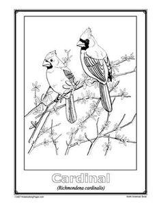 North American Bird Study Nature ActivitiesBook