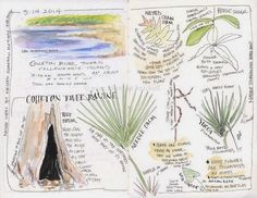 Sketching in Nature: Sketching in the Field.... or Forest