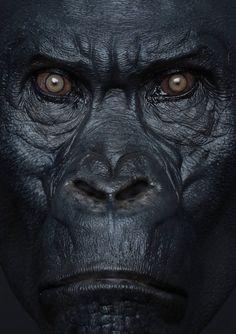 Tarzan Gorilla, Big Gorilla, Crazy Wallpaper, Star Wallpaper, Animals And Pets, Funny Animals, Cute Animals, Zoo Pictures, Maya Modeling