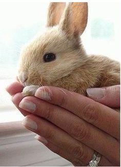 brown baby bunny rabbit