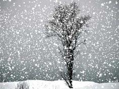 shiv pandit animation snow falling day 1 (+playlist)