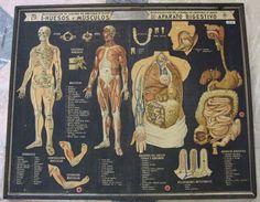 Anatomía en color