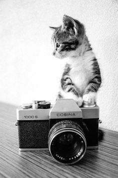 Camera cat | via Tumblr
