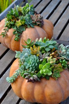 How-to Create a Succulent Pumpkin Planter Ideia para as suculentas Succulent Gardening, Container Gardening, Garden Plants, House Plants, Succulent Planters, Vegetable Gardening, Potted Plants, Garden Web, Ivy Plants