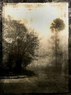 houston    fog 2 on Flickr.