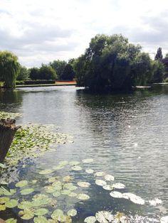 Chelmsford Park