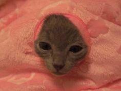 子ネコが「焼き魚」のニオイにつられてベッドの穴から顔を出した → ハマってしまう → すると・・・ - http://iyaiyahajimeru.jp/cat/archives/59376