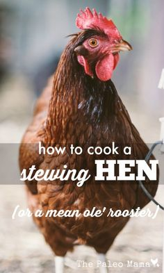 Have you ever wondered what to do with that too-old-to-even-lay-eggs-much-anymore chicken (or mean ole' rooster) that still pecks around in your flock? http://thepaleomama.com/2015/07/how-to-cook-a-stewing-hen/