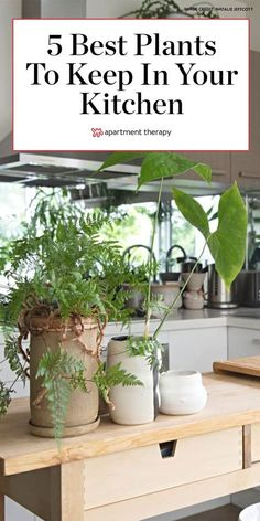 These are the best plants to keep in your kitchen, according to a professional chef. #kitchenplants #herbs #herbgarden #houseplants #indoorplants #plantcare #planttips Herb Garden, Lawn And Garden, Home And Garden, Kitchen Plants, Growing Herbs, Cool Plants, Container Plants, Plant Care, Plant Decor