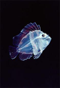 Criaturas inacreditáveis do fundo do mar – parte 2