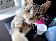 15 Selfies de animales que te haran reir!