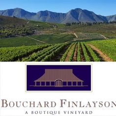 With ingredients such as old world experience, new world innovation, winemaking talent, intelligent experimentation, the natural beauty of the Hemel-en-Aarde Valley, and a terroir and climate that is conducive to viticulture - Pinot noir and Chardonnay, Bouchard Finlayson is the ultimate recipe for truly exceptional experiences and prized memories. In the hidden Hemel-en-Aarde Valley at the Southern tip of Africa lies Bouchard Finlayson, a winery that combines the best of the old ways and… Colby Cheese, Spring Months, Sauvignon Blanc, Pinot Noir, Heaven On Earth, Wine Tasting, A Boutique, Wine Recipes, Old World