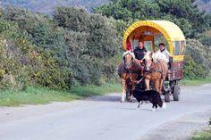 Vogelzug auf #Hiddensee   Gemütlich – Pferdefuhrwerk auf Hiddensee (c) FRank Koebsch