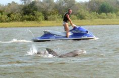 Jet Ski a Dolphin Tour?!  Jet Ski Rentals,Topsail Island, Sneads Ferry and Surf City NC